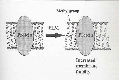 methyl group pic
